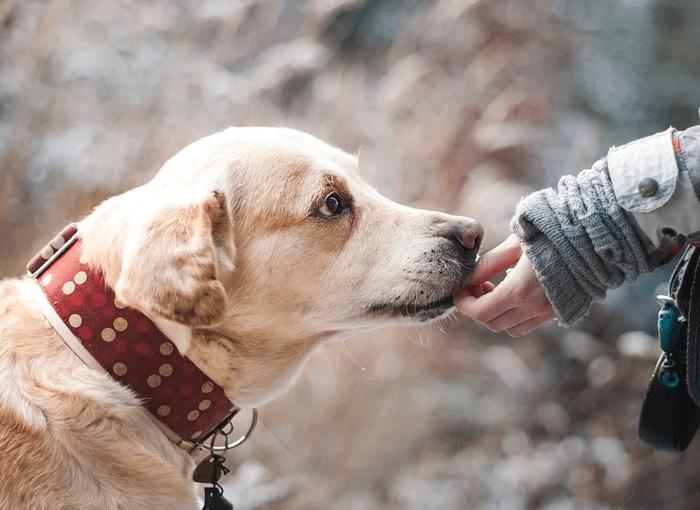 Derechos y obligaciones por tener mascota