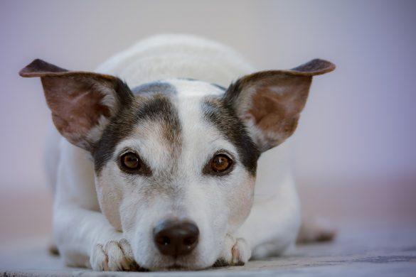 Qué es y qué no es maltrato animal